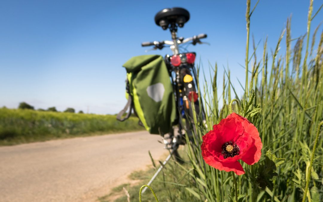 bicycle grass poppy